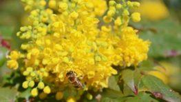 Privítajme spoločne jar na výstavách Kvetena a Včely