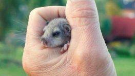 FOTO a VIDEO: Zachráňme mláďatá priamo v prírode
