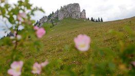 Leto na strednom Slovensku