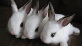Milujte sa a množte sa – po poľsky ako králiky…