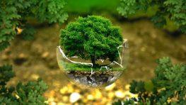 Svetový deň Zeme by sme mali sláviť po celý rok