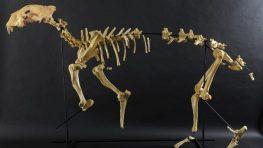 Digitalizačné centrum Múzea SNP na 3D tlačiarňach skompletizovalo kostru leva jaskynného