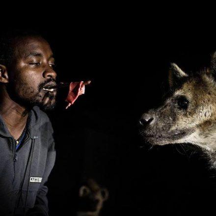 hararske hyeny