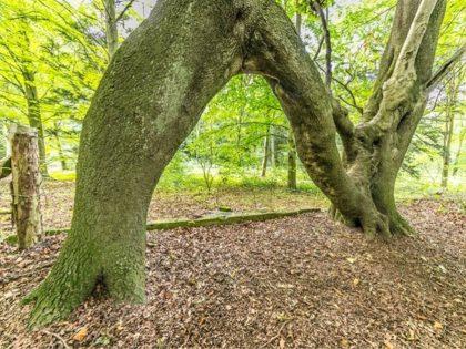 strom pre nellie velka britania