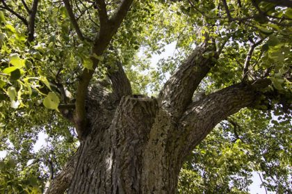 strom-roka2