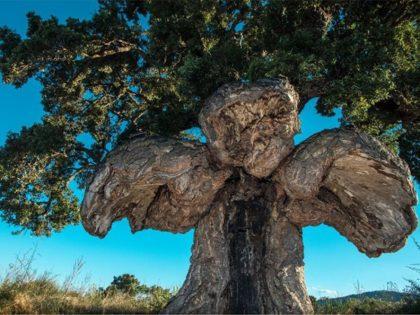 vtaci strom francuzsko