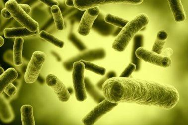 botulotoxinove-bakterie