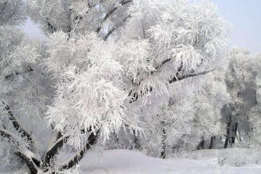 stromy3