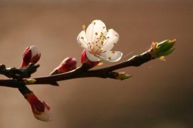 velkonocny kvet
