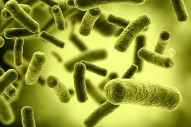 botulotoxinove bakterie