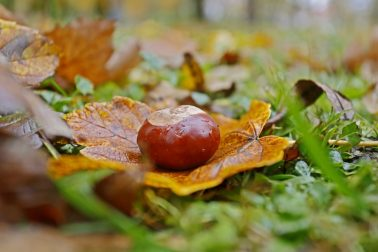 jesen2