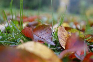 jesen3