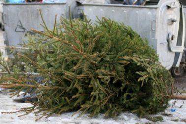vianocny stromcek5