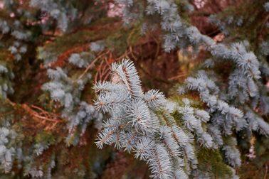 vianocny stromcek9