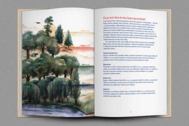 na-kraji-lesa-2