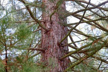 den-stromu1