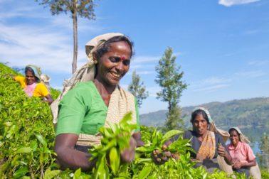 usmev Sri Lanka