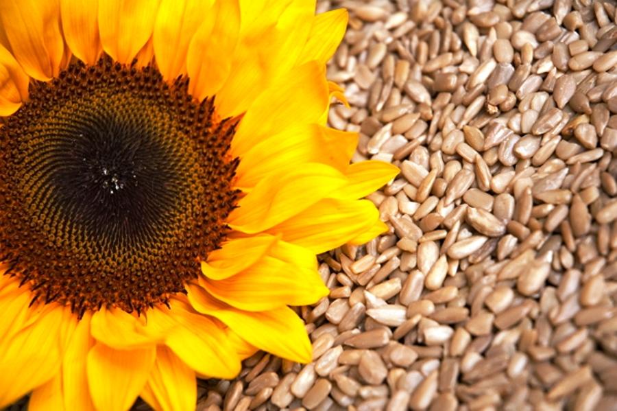 Výsledok vyhľadávania obrázkov pre dopyt slnečnicové semená