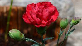 Tradičné oslavy MDŽ v Banskej Bystrici budú 1. marca