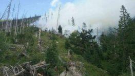 Požiar lesa pri Bystrej sa nerozšíril, nesúvisí s ochranou Národného parku Nízke Tatry