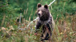 Na Poľane medvedica napadla a zranila známeho fotografa prírody