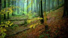 Badínsky prales opäť otvoria pre verejnosť 12. októbra, prihlášky už teraz