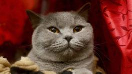 FOTO: Cez víkend je v Banskej Bystrici Medzinárodná výstava mačiek
