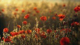 Pripomíname si Deň vojnových veteránov
