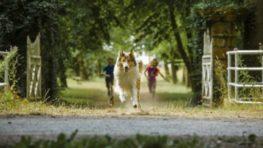 CINEMAX BB ponúka filmové novinky Lassie sa vracia, Emma, 3BOBULE či Sólo