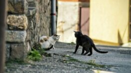 Nechcené mačiatka sa odkladajú v okolí Banskej Bystrice…