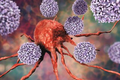 Lymfocyty