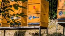 Projekt KRAJ na podporu včelárov priniesol úrodu – 700 kíl medu od študentov včelárstva